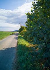 Feldweg bei Sehlem
