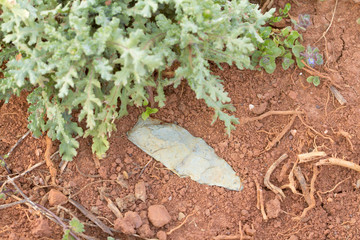 Authentic Native American Indian Arrowhead in dirt