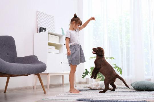 Adorable chocolate labrador retriever and little girl at home