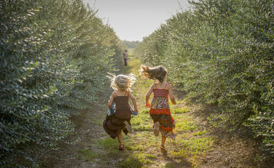 Girls running to greet dad in Olive Orchard