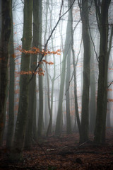 Fog in a forest in the winter