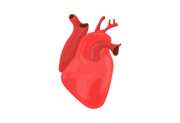 Vector illustration: red heart isolated. Open Heart icon.