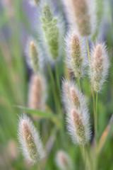 Little Ornamental Grasses