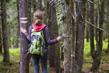 Back view of slim athletic blond tourist hiker girl with stick and backpack walking through lit by sun dense evergreen mountain pine forest. Tourism, traveling, hiking and healthy lifestyle concept.