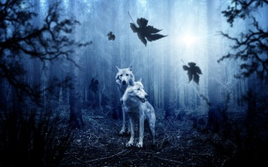 Two wolves in the dark forest