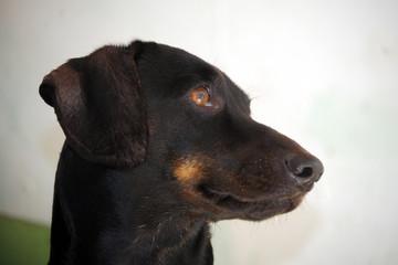 pet - cãozinho