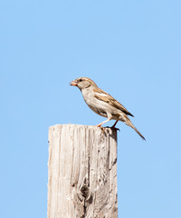 Photo of a bird sparrow sitting on a log against the sky
