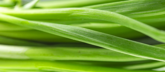 background of fresh, green onions