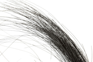 a piece of black hair isolated on a white background