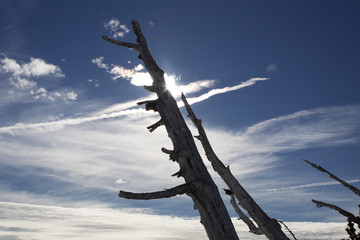 Tree trunk against blue sky and sun one