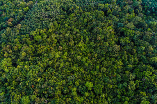 Green tree deep tropical rainforest look down aerial view from drone