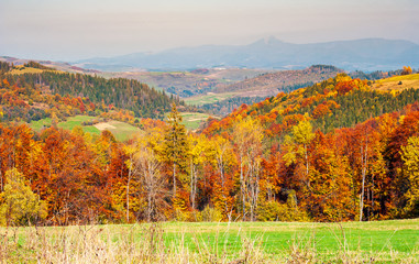 colorful fall foliage mixed forest. lovely countryside landscape in mountains