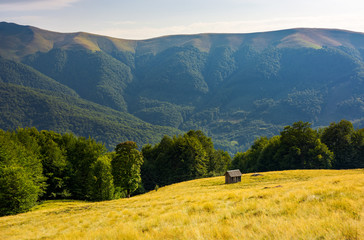 hut on the grassy hill near the beech forest. beautiful scenery in mountains. warm and sunny afternoon in summer