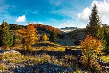 beautiful landscape in mountains. wonderful autumn sunrise with fog in the distant valley. mixed forest in colorful foliage