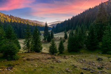 spruce forest in foggy valley at reddish sunrise. beautiful autumn landscape in mountains. Apuseni Natural Park, Romania