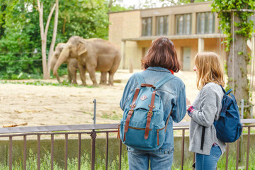 Two girls friends students watching at elephant family feeding in the zoo Wall mural