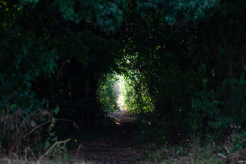 Dark and mist path with bushes and trees like a tunnel light at the end