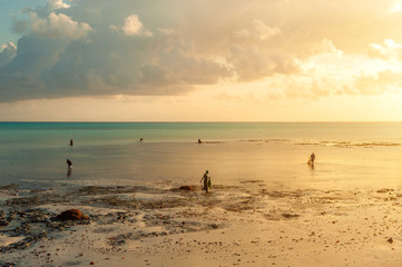 Locals work on the beach at low tide. Men and women gather seaweed at dawn, island of Zanzibar