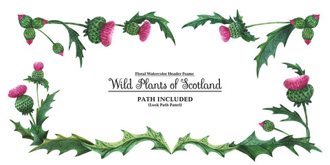 Head banner from thistles. Floral symbol of Scotland
