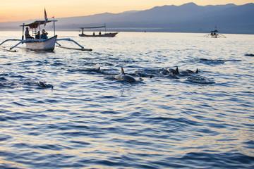 Bali Indonesia free Dolphin boat Watching at Lovina Beach