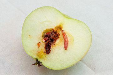 Worm apple is cut in half and worm crawls along