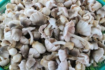 Straw mushroom (Volvariella volvacea) in the basket .