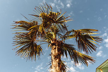 Palm Trees - Perfect palm trees against a beautiful blue sky