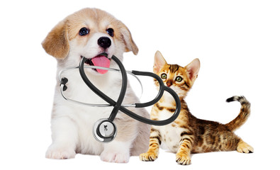 Wall Mural - vet puppy and kitten