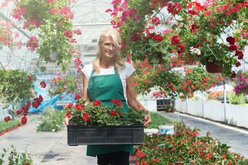 Senior florist in greenhouse