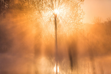Sunrise Light Piercing Through Mist and Trees and Reflecting in Lake in Sceptre Shape.