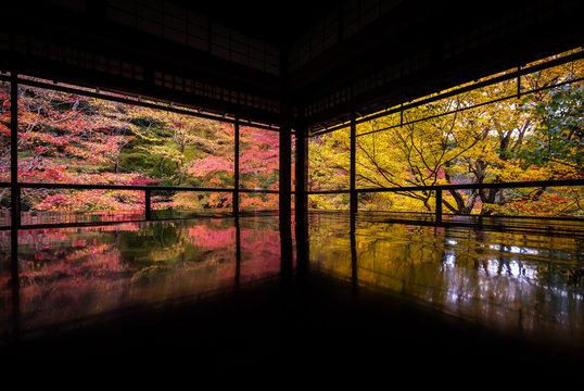 京都府 瑠璃光院 紅葉