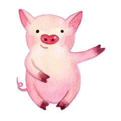Watercolor Pig. 2019 Chinese New Year of the Pig. Christmas greeting card.   Isolated on white background. Cute watercolor illustration.