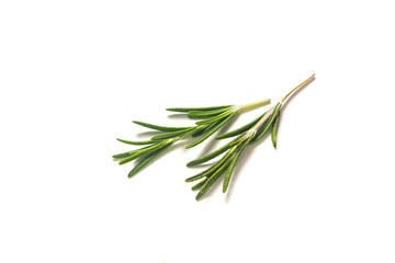 food herbal concept organic Rosemary on white background with copy space