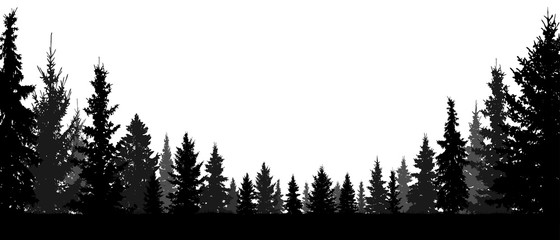 Forest, coniferous trees, silhouette vector background. Tree, fir, christmas tree, spruce, pine