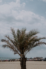 Lovely palm trees on a beach of Spain