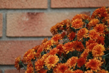 Red/orange flowers and brick