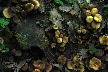 Mushrotopia