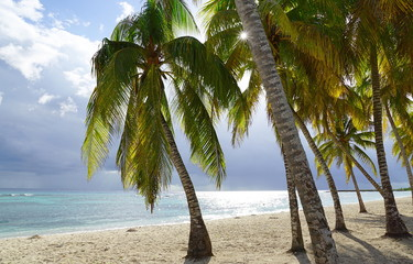 Some Palm trees at a beach in the south of Cuba