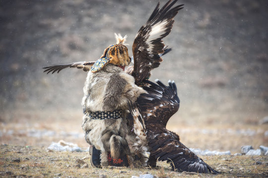 Western Mongolia, Traditional Golden Eagle Festival. Hunter-Nomad Attempts To Separate Two Big  Fighting Golden Eagles. Ancient Kind Of Hunting In The Territory Of Kazakhstan And Mongolia