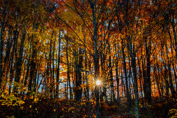 Sunrise starburst through fall foliage in the Great Smoky Mountains in North Carolina.