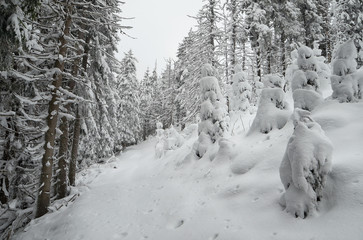 Fototapete - Winter landscape in a mountain forest