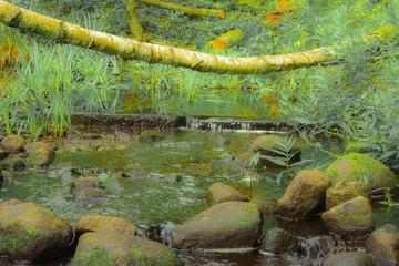 a small river of a swampy area, Braslaw region, Belarus