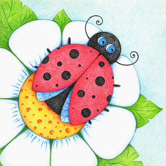 hands drawn picture of ladybird on flower by the color pencils