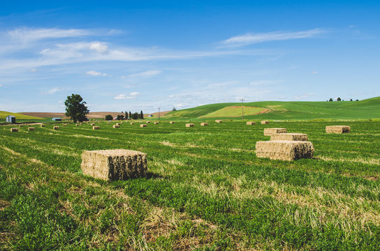 Hay Field in Sprague Washington