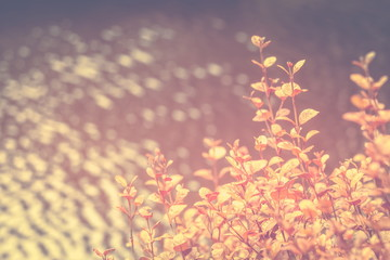 Background nature image with copy space in muted orange tones