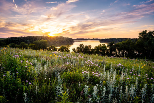 Wildflowers over the Lake at sunset