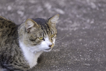 Gato em quintal