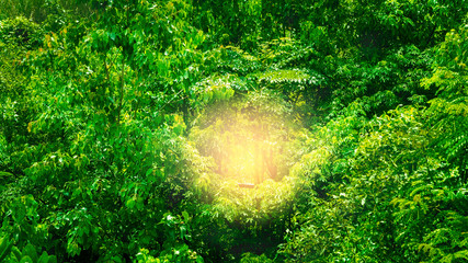 Tropical forest with sun nature green