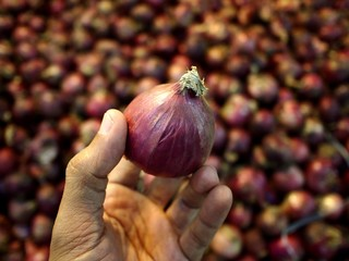 Hand holding an Onion
