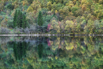 Forest Reflected on the Lygnstoyl Lake